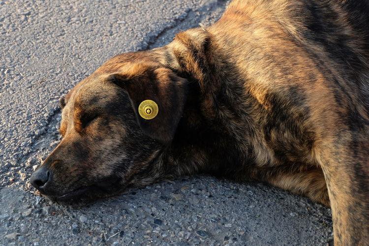 Dog is sleeping. Animal Animal Themes Dog Dog Love Dog Sleeping  Dogs Dogs Of EyeEm Dogs On The Street Dogslife Domestic Animals One Animal Relaxation Sleeping