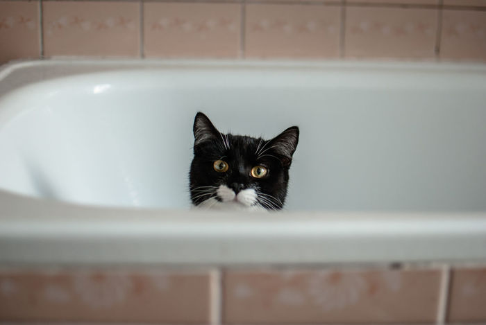 Animal Eye Animal Themes Animals Bathroom Bathtub Black Color Cats Close-up Domestic Animals Domestic Bathroom Domestic Cat Domestic Room Feline Furry Indoors  Kittens Kitty Light And Shadow Looking At Camera No People One Animal Pet Pets Portrait The Week Of Eyeem