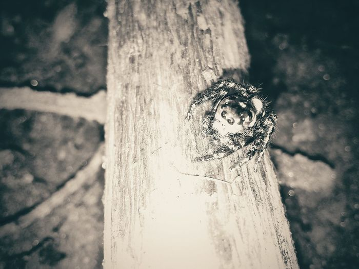 Hanging Out Taking Photos Spider Enjoying Life Eyeemphotography Lucknow Life EyeEm Best Shots Amity The Following And Love To Click Photos