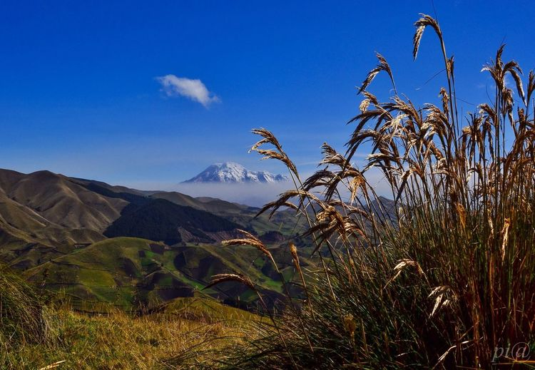 Paramo in Ecuador South America with Chimborazo Volcano in the background EyeEm Best Shots EyeEm Nature Lover Landscape Photography Eye4photography  The Traveler - 2015 EyeEm Awards The Great Outdoors - 2015 EyeEm Awards
