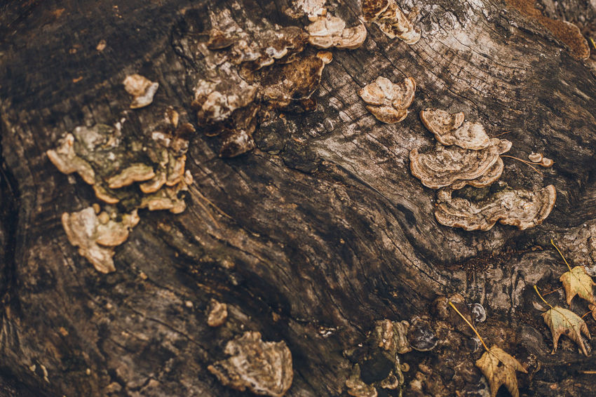 More: PART I: https://barbara-duchalska.blogspo PART II: https://barbara-duchalska.blogspo Animal Animal Themes Animals In The Wild Backgrounds Bark Brown Close-up Day Full Frame High Angle View Land Nature No People Outdoors Pattern Plant Textured  Tree Tree Trunk Trunk Wood - Material