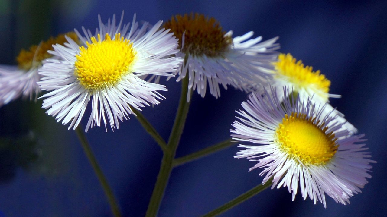 flower, yellow, fragility, petal, beauty in nature, nature, flower head, freshness, growth, blooming, close-up, plant, no people, outdoors, day