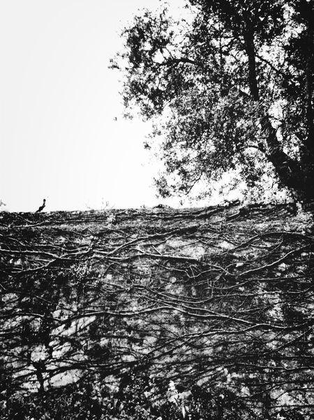 Tree-Dimensional Tree Roots Pretoebranco KCe