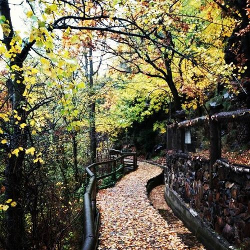November Rain Andorra Paseosmolones