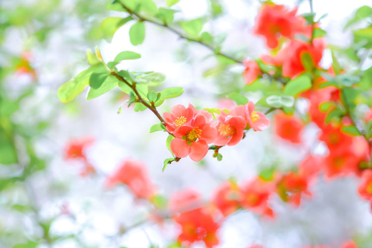 Beauty In Nature Blooming Close-up Flower Focus On Foreground Freshness Nature Red&green X-T1 XF60mmF2.4 R Macro