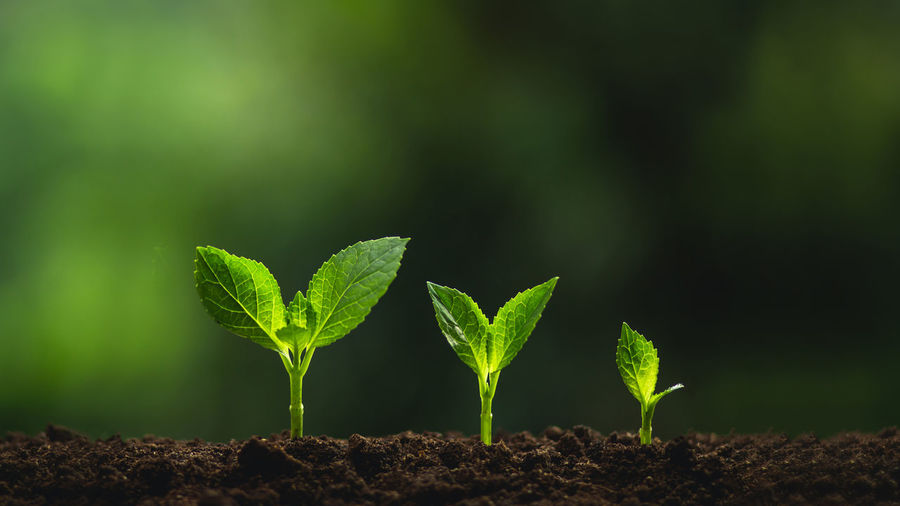 Plant a tree Natural tree Green backgroun seedlings in nature Agriculture Beauty In Nature Beginnings Close-up Day Dirt Field Focus On Foreground Gardening Green Color Growth Land Leaf Nature New Life No People Outdoors Plant Plant Part Plantation Planting Sapling Seedling Vulnerability