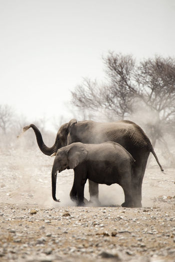 Elephants at Etosha National Park, Namibia Africa Dry Elephant Elephants Etosha Namibia Nature Safari Safari Adventure Travel Destinations Wildlife Wildlife & Nature