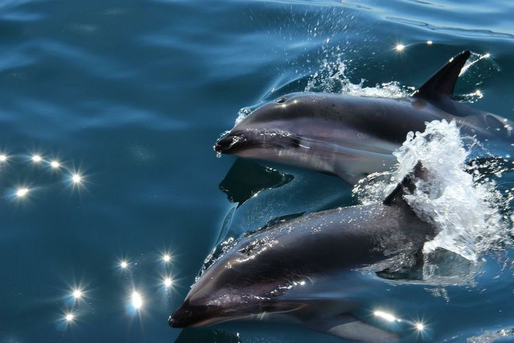 High angle view of dolphins in sea