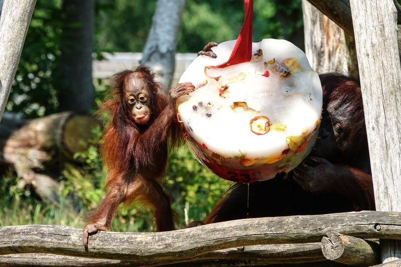 Close-up of monkey hanging on tree