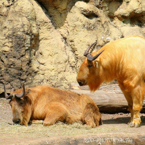 ZOO-PHOTO Zoo Animals 多摩動物公園 ターキン そろそろ機嫌なおしてよ!