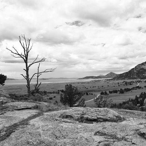 Desolate. Landscape Photography Patagonia Travel Dead Trees Clouds Bnw Blackandwhite Nature Rocks Nikonnofilter Nikon D3300