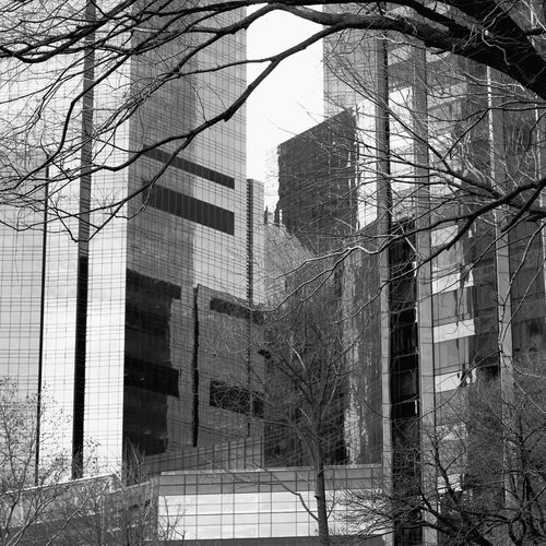 Bare trees in front of building