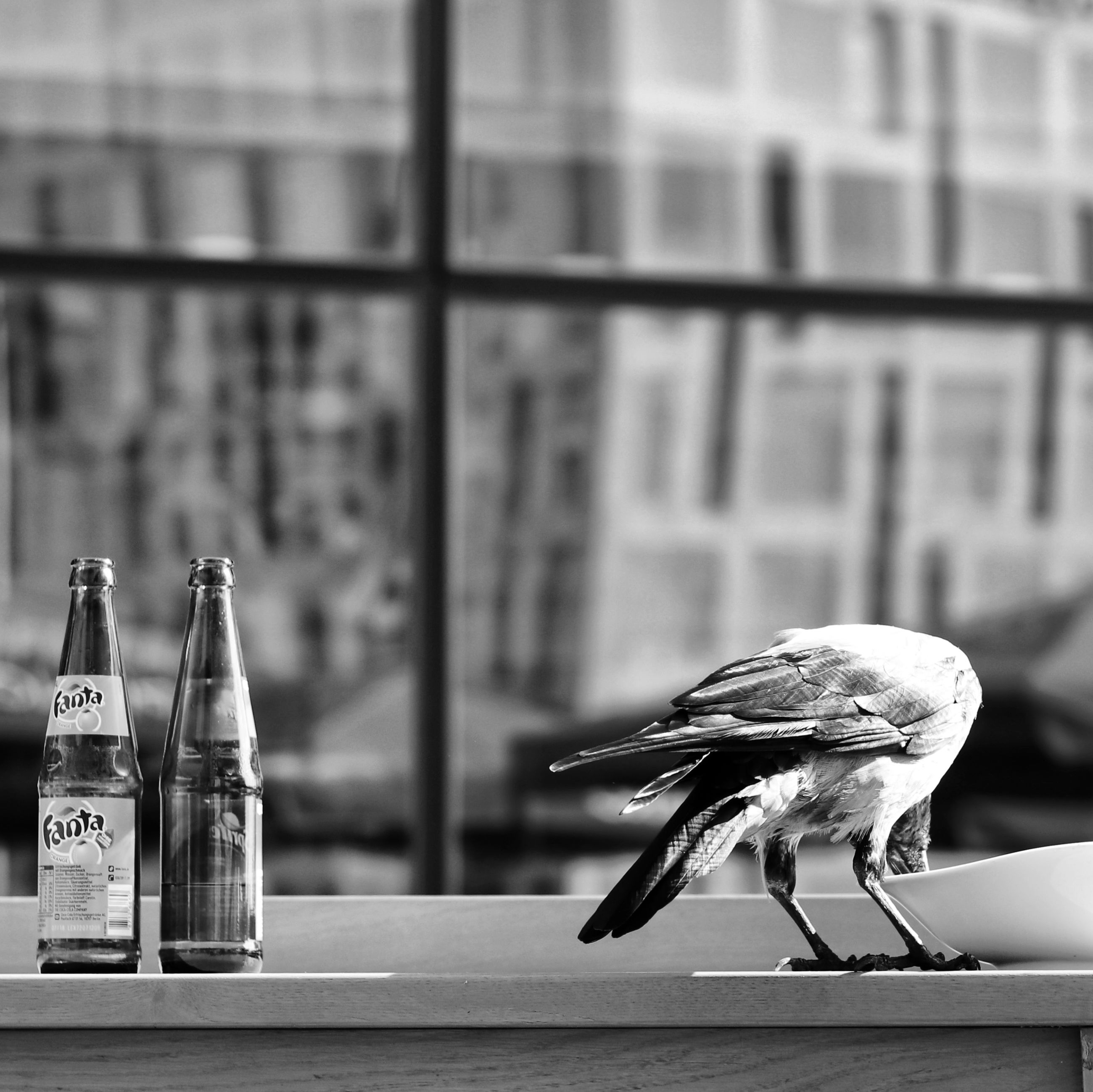 bird, animal themes, focus on foreground, animal, vertebrate, animal wildlife, animals in the wild, table, no people, container, indoors, glass - material, day, bottle, one animal, close-up, window, food, architecture