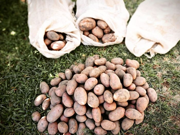 Bag of potatoes on the grass