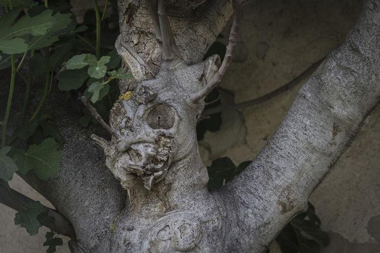 Álava, Araba Branch Demon Figgtree Leaf Leaves Natural Form Nature Tree árbol