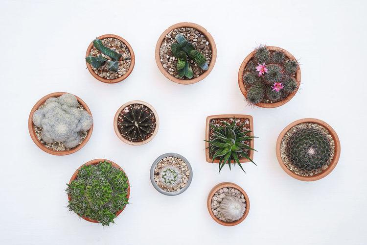 Different succulents and cactus in clay pots on light wooden background. Top view. Freshness Potted Plant Choice High Angle View White Background Table Arrangement Green Hobby Hobbies Plant Pot Clay Top View Flat Lay House Home Interior Cactus Cactus Flower Cactus Garden Cactus Collection Cacti Succulent Succulent Plant Botany Different Echeveria Floor Garden Greenery Decoration Decor Growth Grow Hipster Morning Light Nature Small
