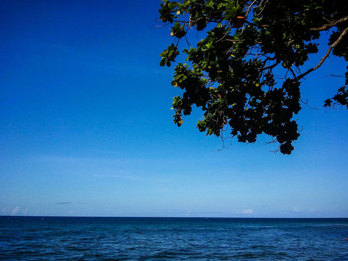 Sea Blue Water Horizon Over Water Scenics Tranquil Scene Tree Beauty In Nature Tranquility Outdoors Nature Sky Clear Sky Day Boholmoments Bohol Island Philippines Bohol Island Travel Destinations EyeEmNewHere