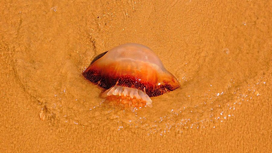 Close-Up Of Jellyfish On Shore