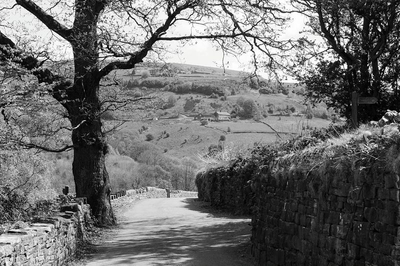 Tree Nature Growth Outdoors Day No People Scenics Plant Beauty In Nature Water Sky Monochrome Black & White Black And White The Great Outdoors - 2017 EyeEm Awards Calderdale Hill And Dale BYOPaper! Yorkshire Tree Magical Places Tranquility Road Countryside Country Life