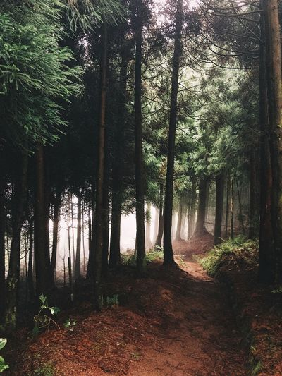 Trail Fog Nature_collection Adventure Tree Plant Nature Architecture Day No People Growth Land Outdoors Forest Tranquility Beauty In Nature WoodLand Tree Trunk Landscape Autumn Mood