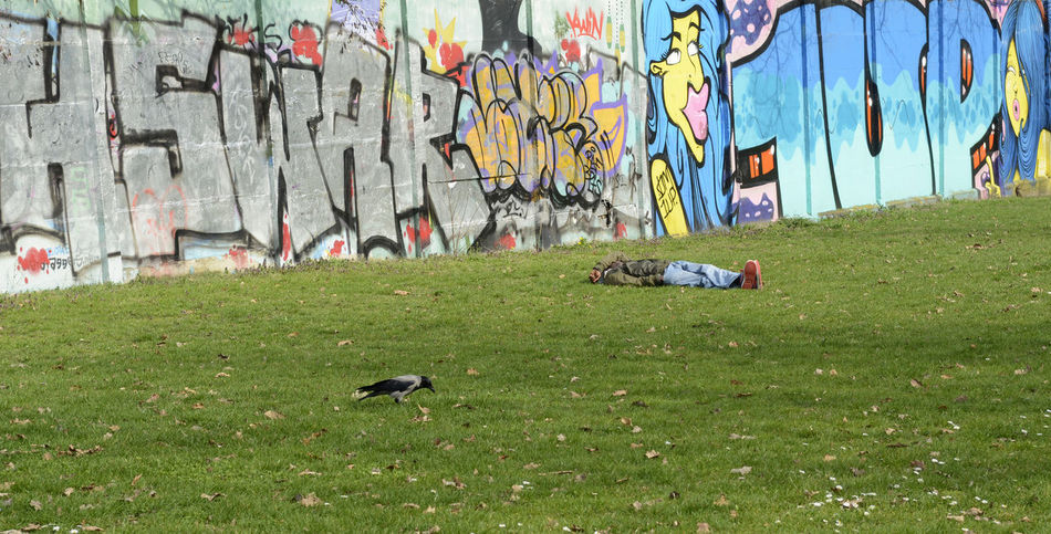 man sleeping Alcohol Art Art And Craft Berlin Bird Creativity Crow Day Field Germany Grafity Grass Green Color Lawn Man Multi Colored Outdoors Resting Sleeping Wall
