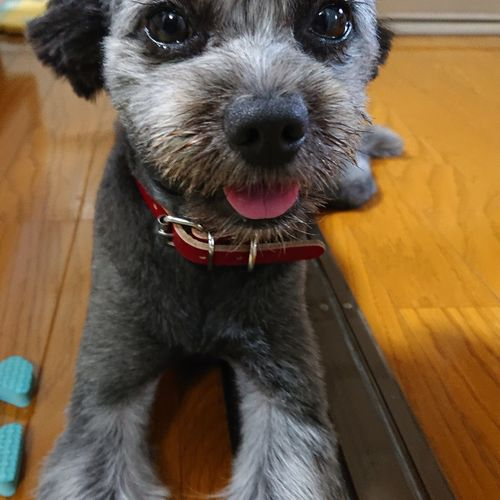 Pets Lap Dog