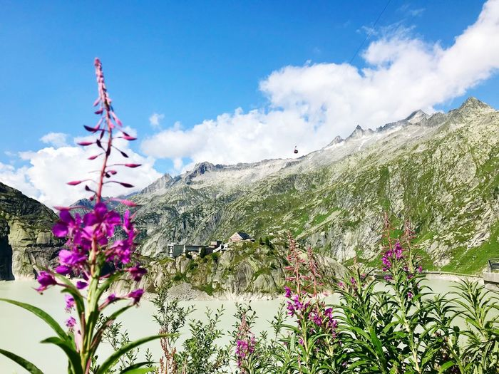 Grimsel Hiking Clouds Barrier Lake Switzerland Alps Sky Plant Flower Flowering Plant Cloud - Sky Growth Nature No People Pink Color Outdoors