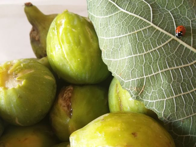 Coccinella e fichi Green Color Puglia Puglia South Italy Figs Ladybug Ladybug🐞 Nofilter Nofilter#noedit No Filter, No Edit, Just Photography No Filter South Italy Water Leaf Close-up Green Color Tropical Fruit Fig