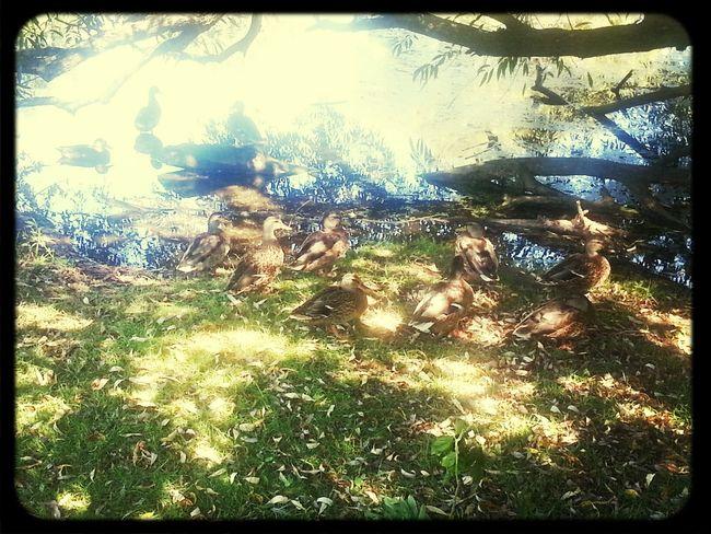 we took pics of the ducks<3