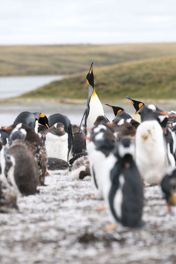View of penguins on shore