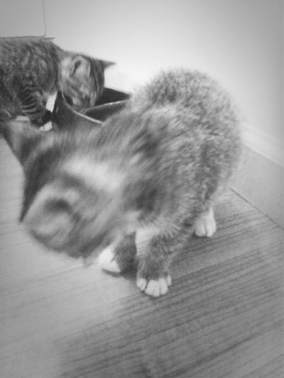 Love them Catcatcat Cats Kitty Kittens