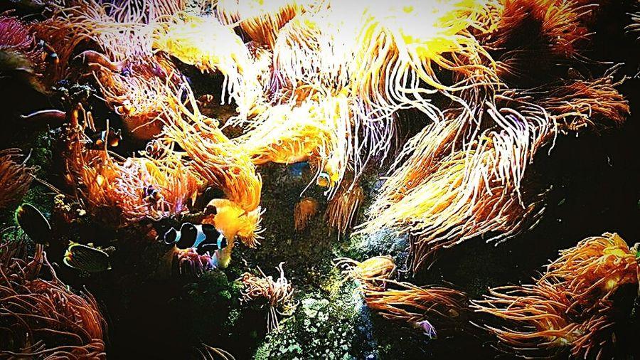 UnderSea Sea Life Nature Anenome Coral Reef Marine