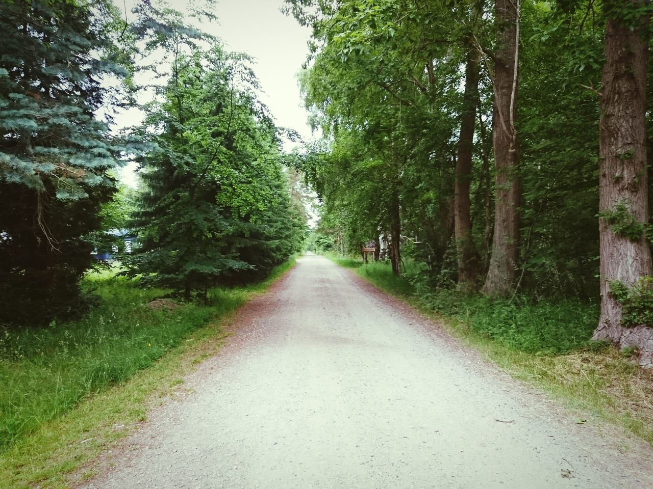 Empty Road By Trees In Forest
