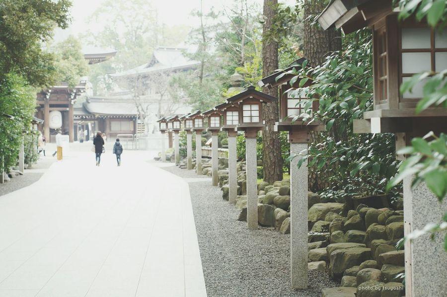 寒川神社にて Taking Photos Getting Inspired EyeEm Nature Lover Road Shrine Hugging A Tree