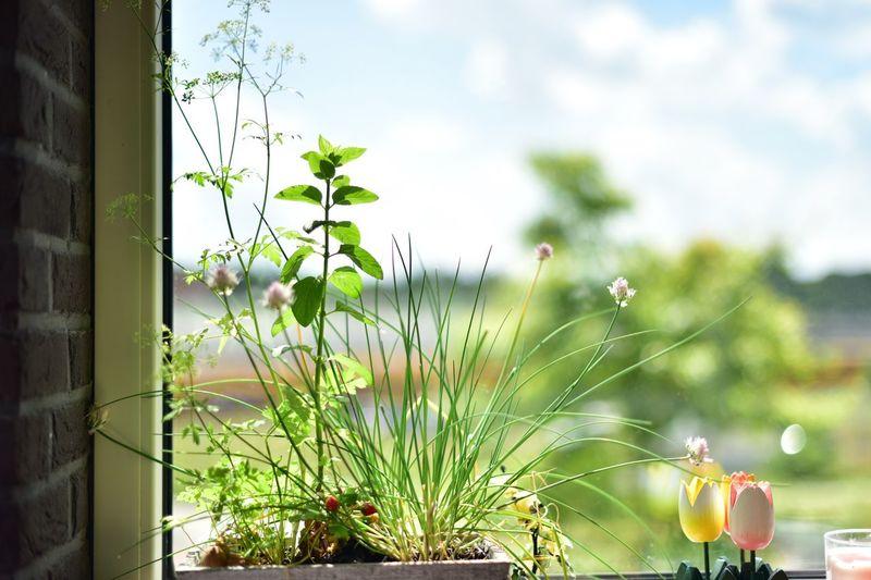 Herbs Herbs