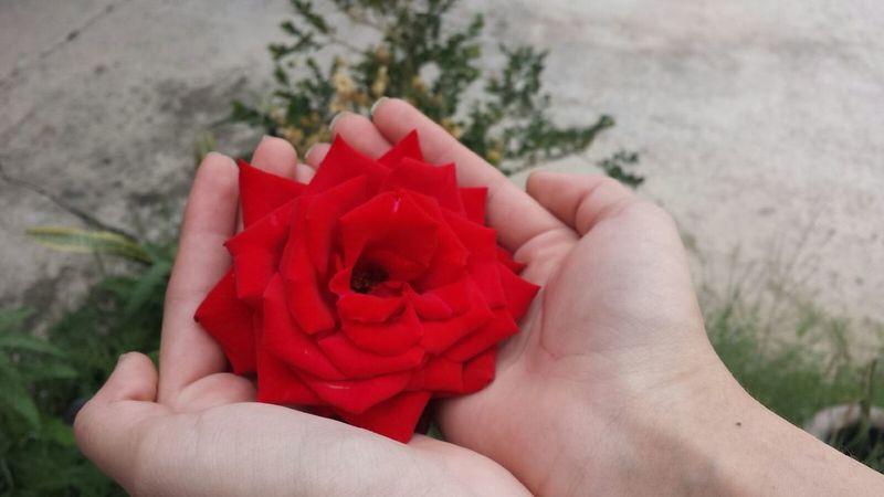Enjoying Life Holding Flower Roses🌹 Nautural Beauty Showcase April Noedit Nofilter