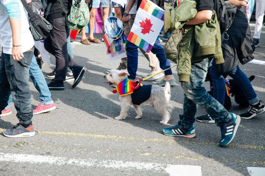 Taipei, Taiwan - Oct 28, 2017: Hundreds of thousands came out on streets of Taipei for the 15th Taiwan Pride Parade. The parade started marching from Ketagalan Boulevard to three different avenues and made Taipei even more colorful with all shades of rainbow. This year's goal is to promote inclusive education as it would lead to better acceptance. Taiwan is about to be the first in Asia to officially legalize 'equal marriage'. Gay Pride LGBT Rainbows LGBT Rainbow Rainbowflag Taipei Pride Taiwanese Dog Gay Pride Parade Gaypride Lgbt Flag Lgbt Pride Lgbtpride Loveislove Lovewins Pride2017 Prideparade Rainbow Taiwan Pride Taiwanpride Taiwanpride2017 This Is Queer Love Is Love