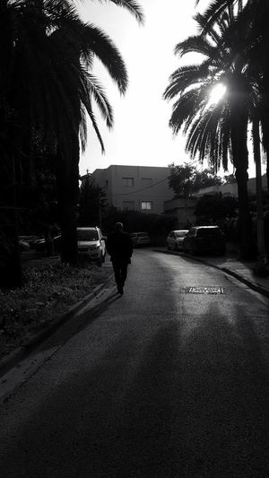 Stealth mode. Man Walking Around The City  Sunny Day Black And White Mysterious Man Palm Tree Silhouette Tree City Road Sky Empty Road