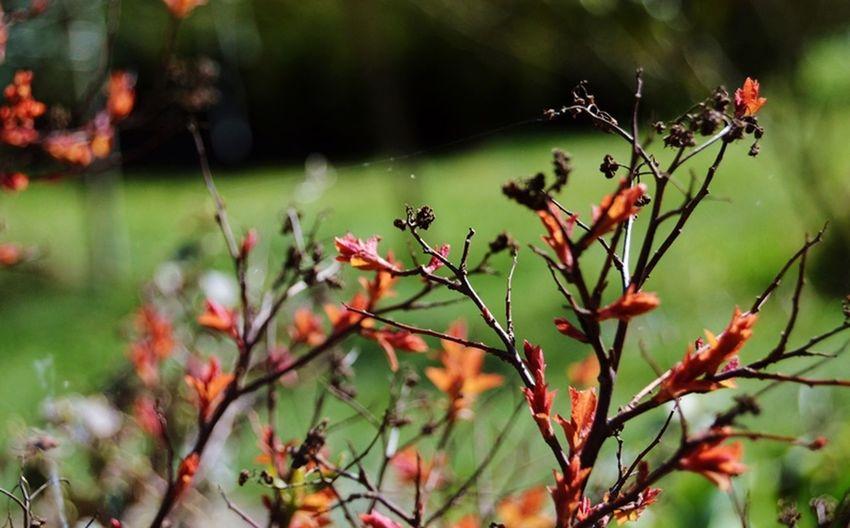 Nareszciewiosna 😊😀👌 Wiosna 😊 First Eyeem Photo
