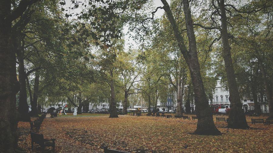 A little park