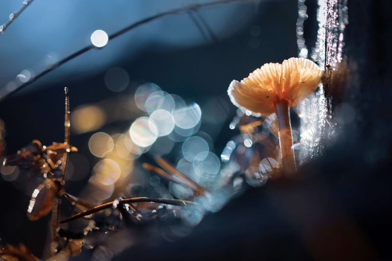 Bokeh Bokehlicious Bokeh Photography Bokeh Mushroom Photography Fungi Svamp Canon 70d Nature Photography Skog Mushroom Frozen Macro Photography Nature Västerbotten Autumn Höst EyeEm Selects Focus On Foreground Close-up No People Plant Nature Indoors