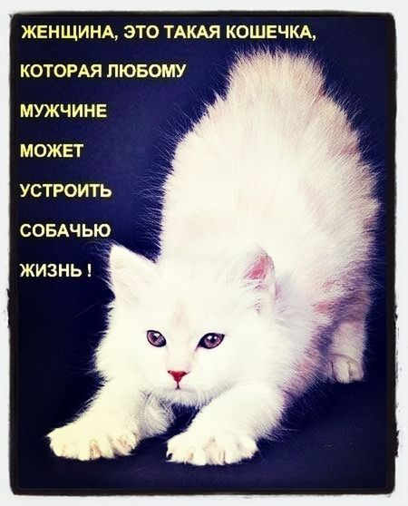 ? Hello World Hi! Cat Kitty