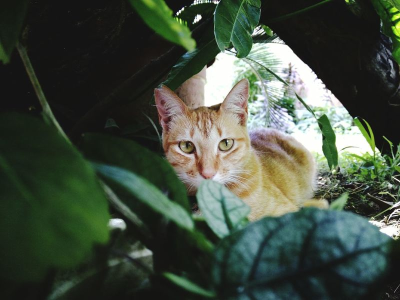 Home Philippines Outdoors Hunt Feline Animal Photography Animals Garden Photography Garden CatAnimals In The Wild Meow The Great Outdoors - 2016 EyeEm Awards Meow Meow Meow🐱 Love Beautiful Beauty In Nature
