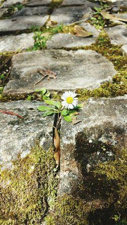 Spring Nature Flowers Feel The Love Flowerpower Urban Spring Fever