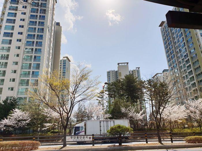 City Tree Water Skyscraper Sky Architecture Building Exterior Built Structure