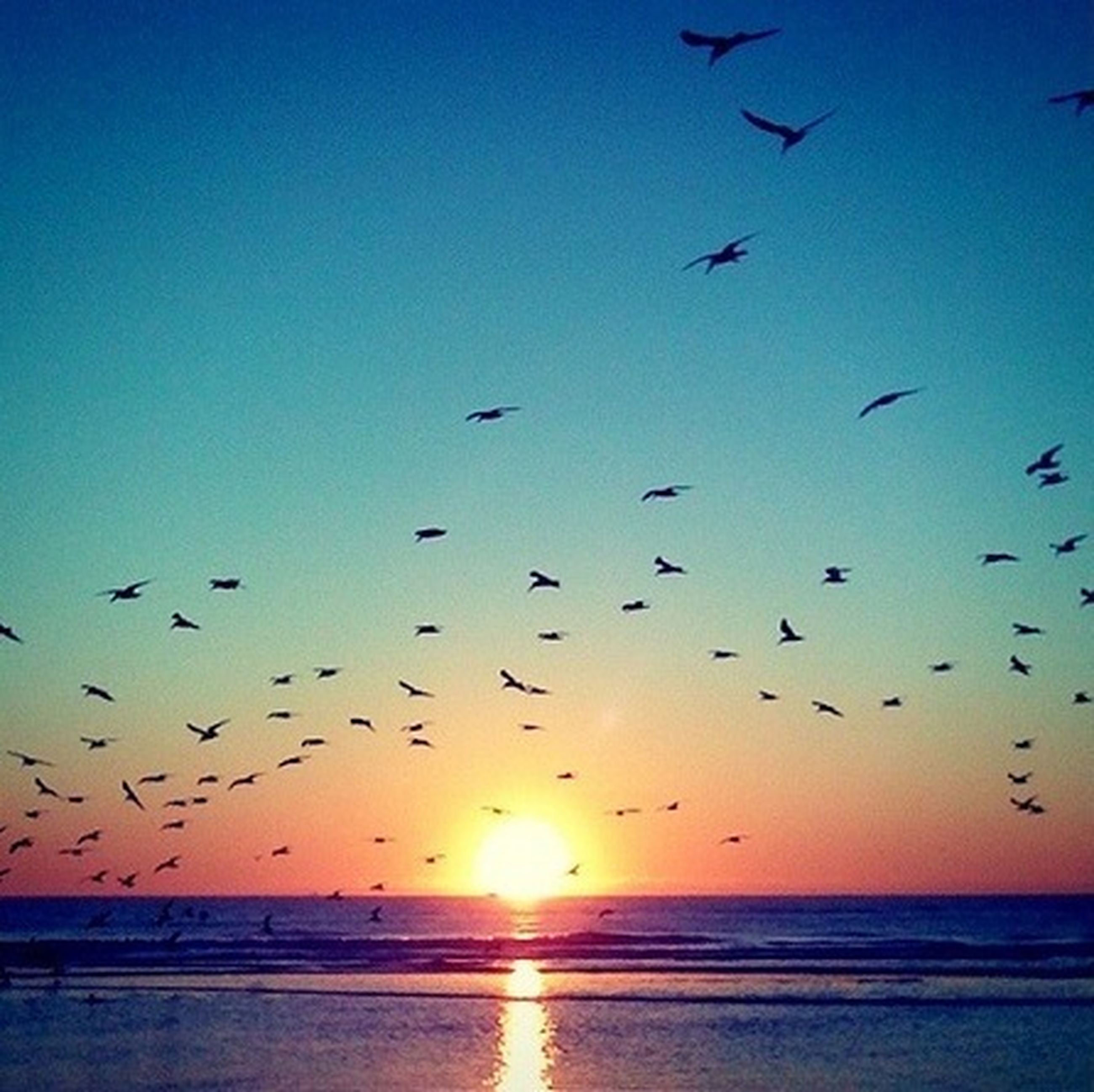 bird, sunset, flying, animal themes, water, sea, animals in the wild, wildlife, horizon over water, flock of birds, sun, sky, scenics, beauty in nature, beach, tranquil scene, silhouette, nature, tranquility