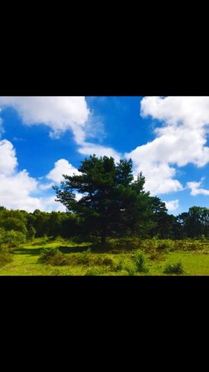 Beauty In Nature Tree No People Cloud - Sky Nature Outdoors Tranquil Scene Wirral United Kingdom