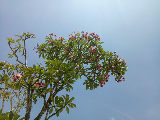 EyeEmNewHere Calmness Natural Light Nofilter Skyandtrees Naturalcolor  Tree Flower Branch Beauty Blue Leaf Sky Blooming