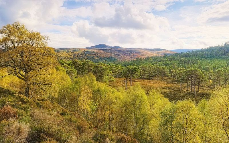 My Place. Old Caledonian Forest reserve Scots Pine trees, heather, on a sunny morning. Glen Affric Scotland Scottish Highlands Landscape Nature Trees