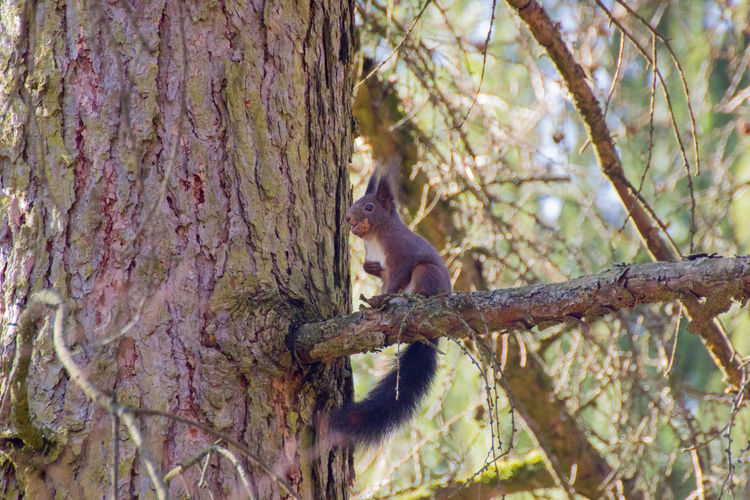 Animal In Tree Animal Photography Animal Themes Animal Wildlife Animals Animals In The Wild Animals In The Wild Beauty In Nature No People One Animal Squirrel Squirrel Eating Squirrel Life Squirrel Photo Wildlife & Nature Wildlife Photography